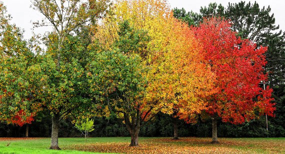 Which Plants Are Best for Autumn Colour?