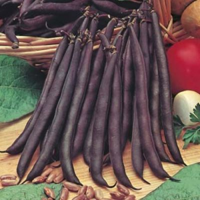 Bean Purple King - seed