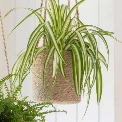 Hanging Pot - tall jute