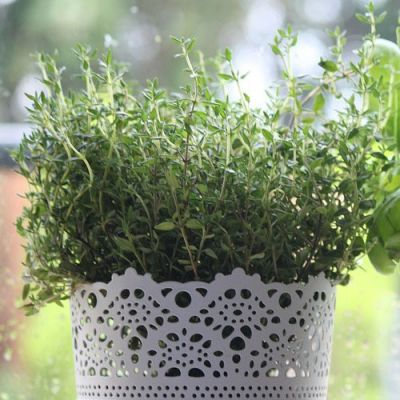 thyme seed